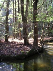 hannum brook - brook  bend in afternoon light